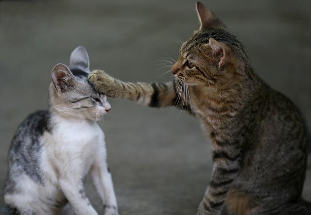 kā iepazīstināt kaķus